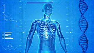 drawing of human skeleton