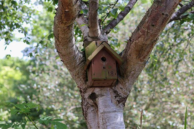 Image of nesting box in Peel Park grounds